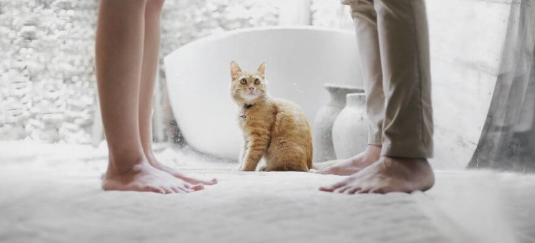 two people's feet in the snow with a cat between them