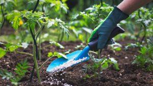 Making Your Own Fertiliser